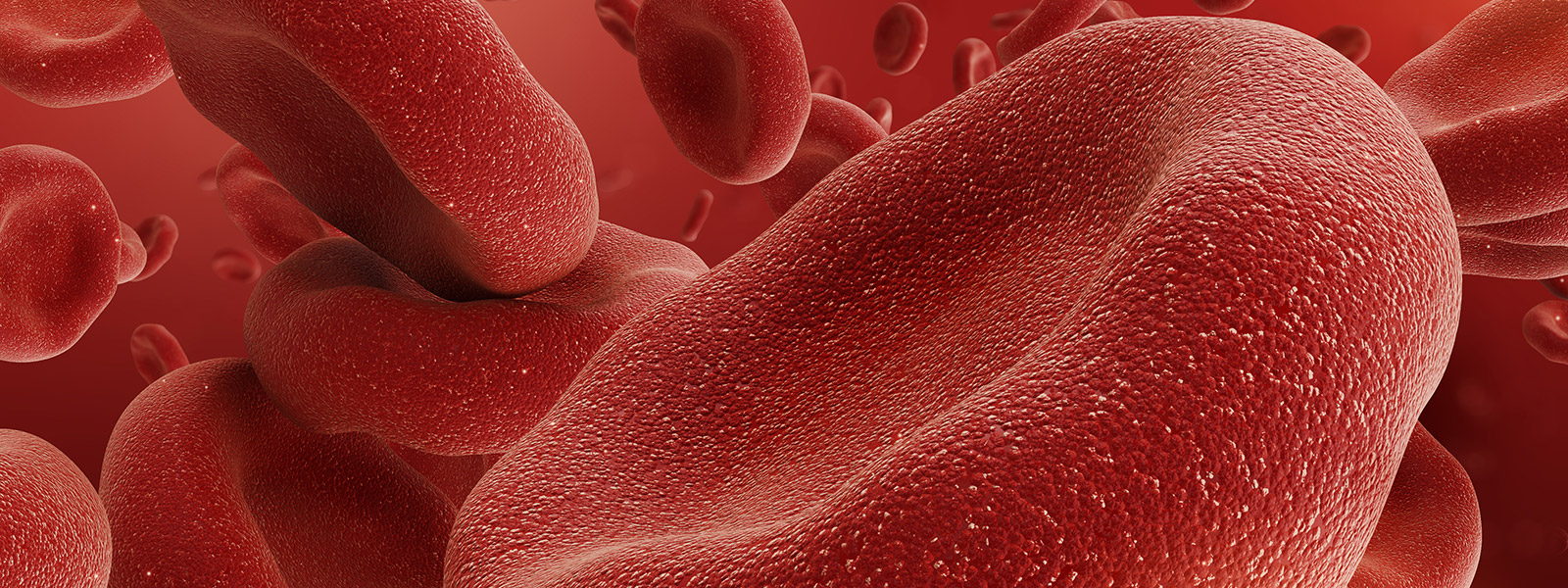 group of red blood cells